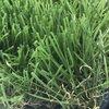 หญ้าเทียม GL1942-326 40 มม. หนาแน่น ราคาถูก